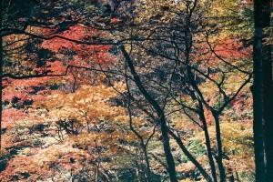 紅葉の高瀬峡ハイキング